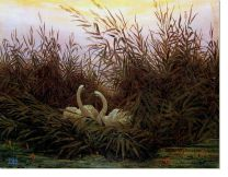 Постер Лебеди в камышах на рассвете (Swans among the reeds at the first dawn)