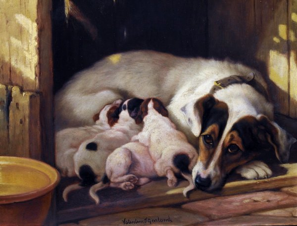 Собака и щенки (Dog and Puppy)