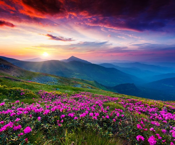 Цветы в горах на закате (Flowers in the mountains at sunset)