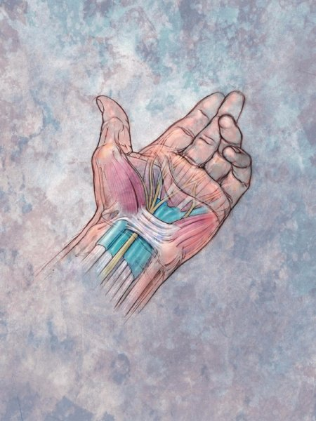 Строение руки (The structure of the hand)
