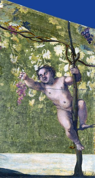 Пути сбора винограда, (Putto gathering Grapes)