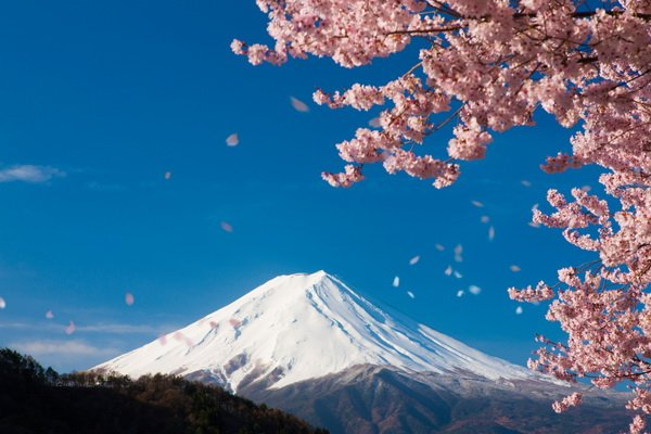 Цветение сакуры в горах (Cherry blossoms in the mountains)