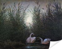 Плакат Лебеди в камышах (Swans among the reeds)