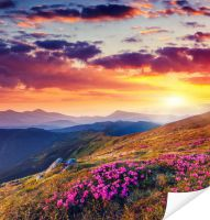 Плакат Цветы в горах на закате (Flowers in the mountains at sunset)