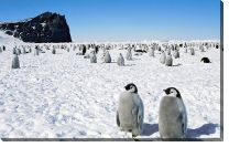 Картина Пингвины (Penguins)